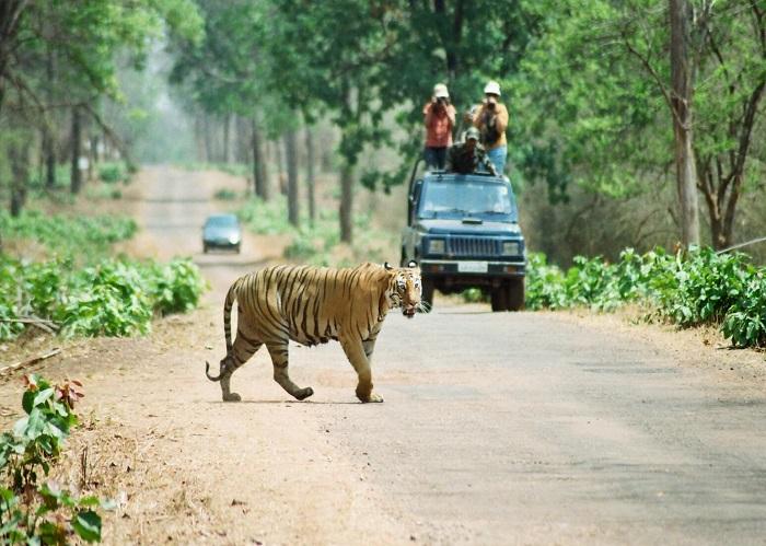 Tadoba tiger reserve- Maharashtra Wild Trail