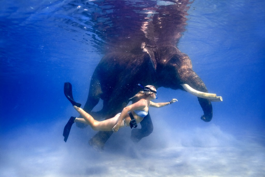 Swim with elephant at Radha Nagar beach