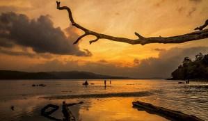 tree branch, Andaman islands