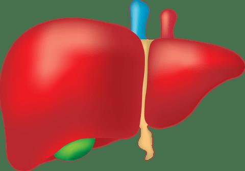 reduces liver damage