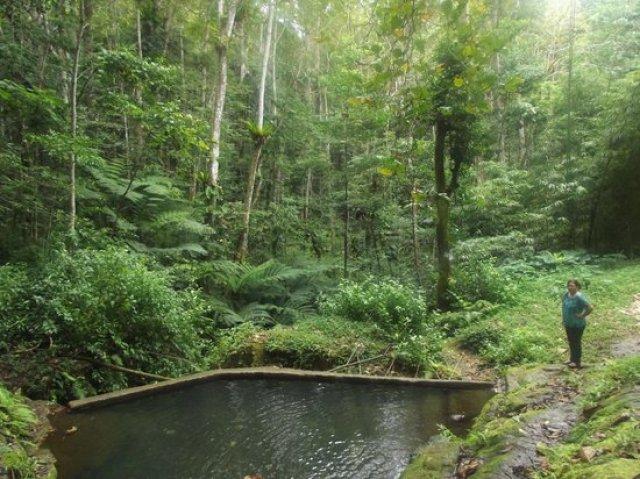 'Eua's tropical rainforests