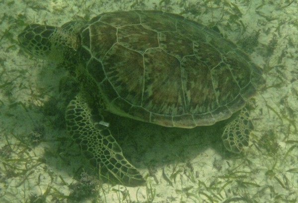 Sea Turtles on Mexico's Yucatan Peninsula