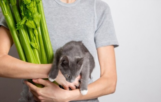 Can Cats Eat Celery