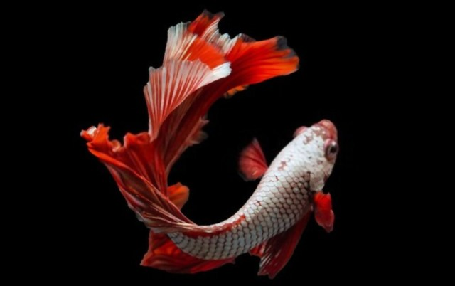 How To Care For A Betta Fish