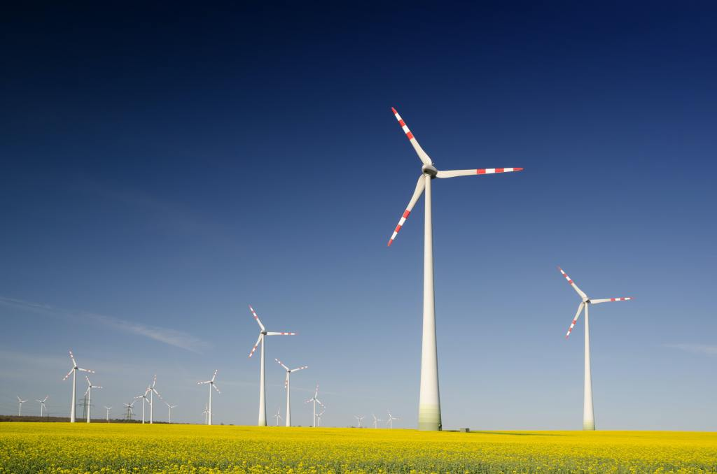 Painting Wind Turbines Reduces Bird Deaths by 70%