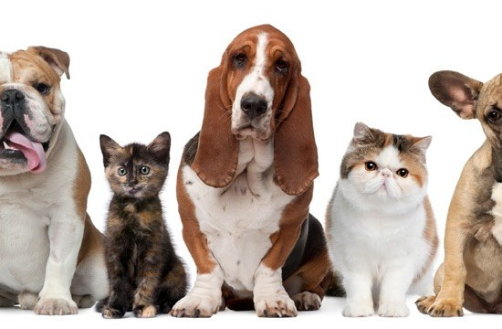cat and dog food with allergies
