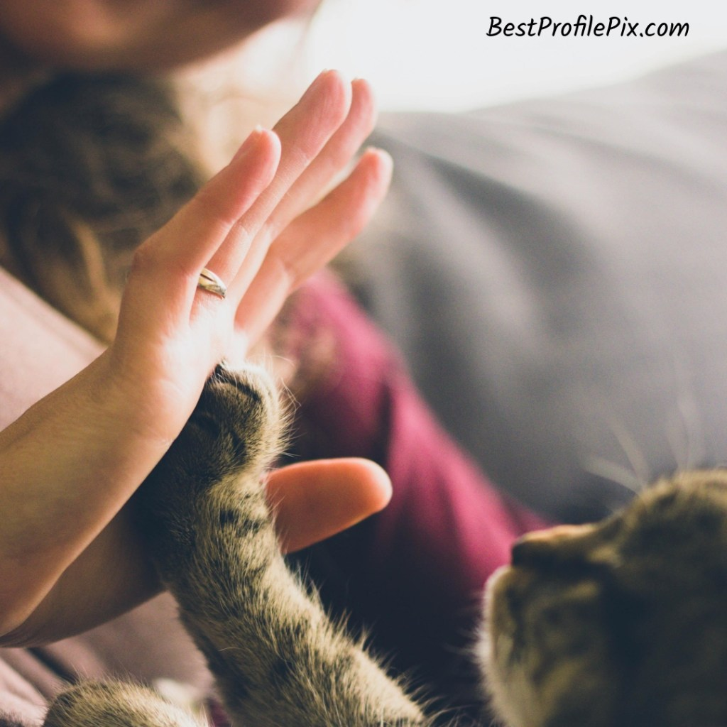 Cute Kitten High Five Profile Pic