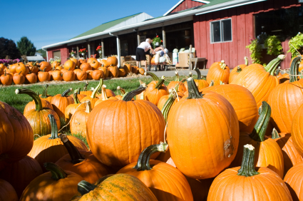 Lake Norman area pumpkin patch