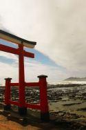 Torii arriving at the Aoshima shrine.