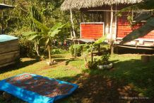 Drying the organic cacao beans, Bocas del Toro, Panama