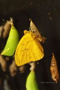 The yellow pierdae is almost ready to fly away