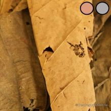 Natural dyeing: fresh teak leafs for pink, dry teak leaves for grey