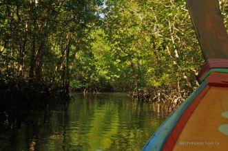 Navigating through the mangrove to the James Bond island, Phang Nga bay, Thailand