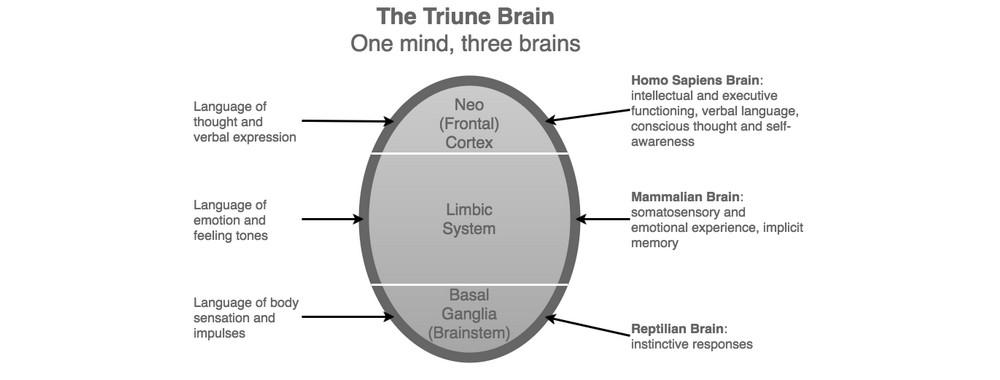 Tiune Brain image