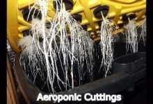 Photo of Aeroponic Cloning The Easy Option?