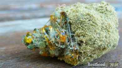 Photo of How to Make Moon Rock Weed High in THC and Cannabinoids