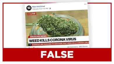 Photo of Cannabis and coronavirus: what you need to know