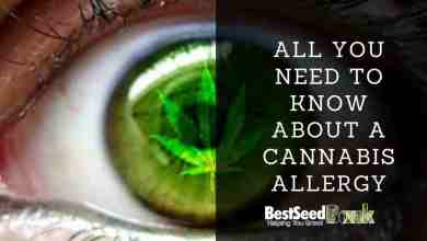 Photo of All you need to know about a cannabis allergy