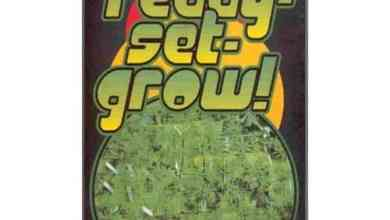 Photo of Ready Set Grow