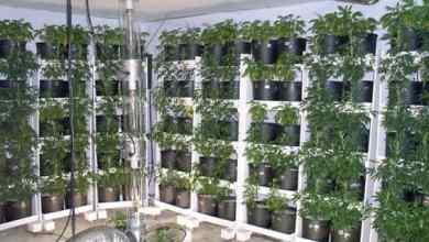 Photo of Soil Vertical Garden