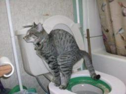 litter kwitter cat toilet training review