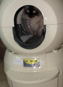 Sally using her litter robot 2