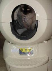 Sally using her Litter Robot