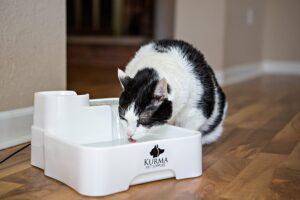 kurma water fountain review for cats