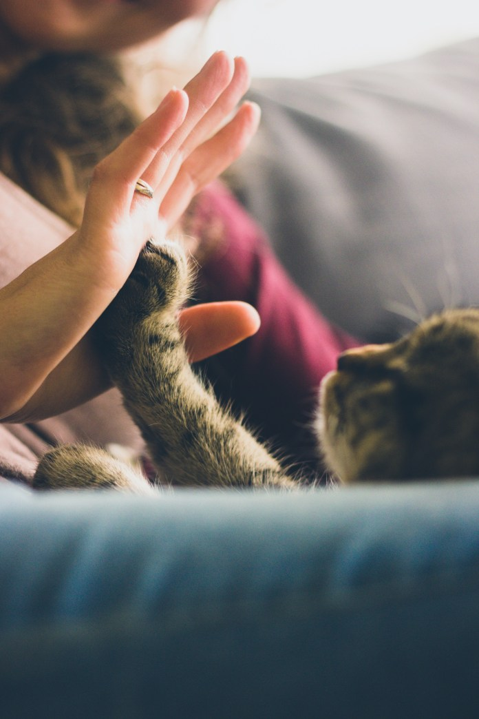best nail clippers for felines kittens adult cats