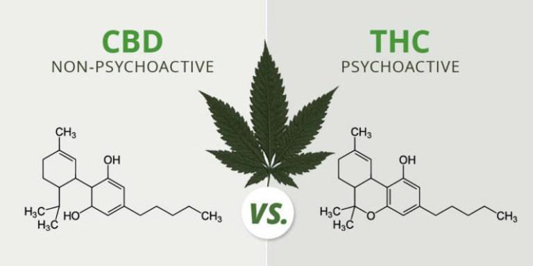 Illustration of CBD vs THC