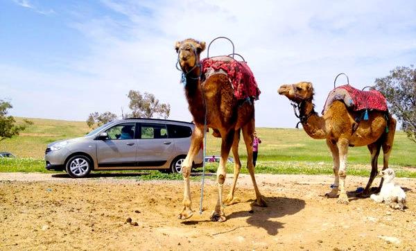 Dacia Lodgy Morocco July 2013