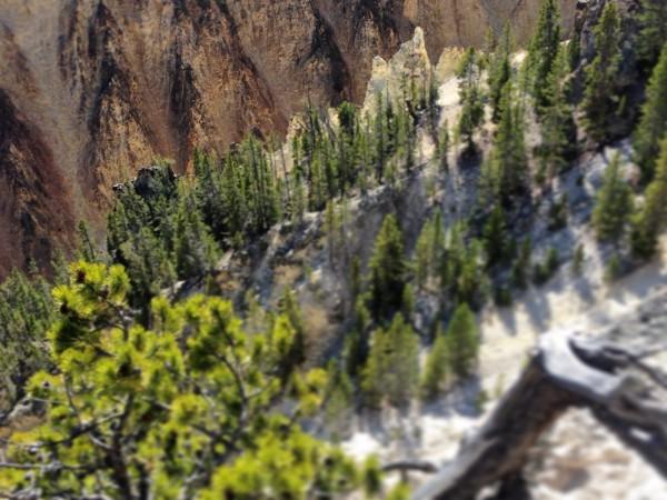 Yellowstone NP 4