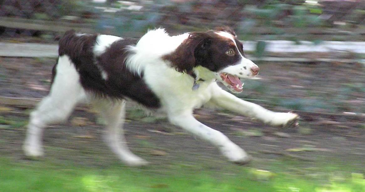 Trixie running