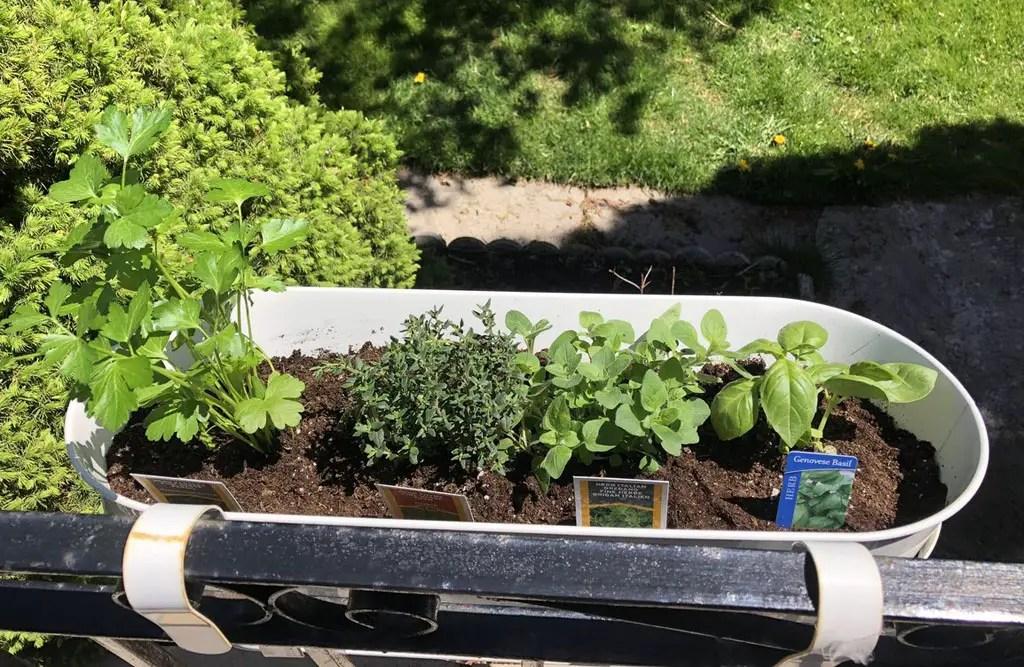 tiny house garden