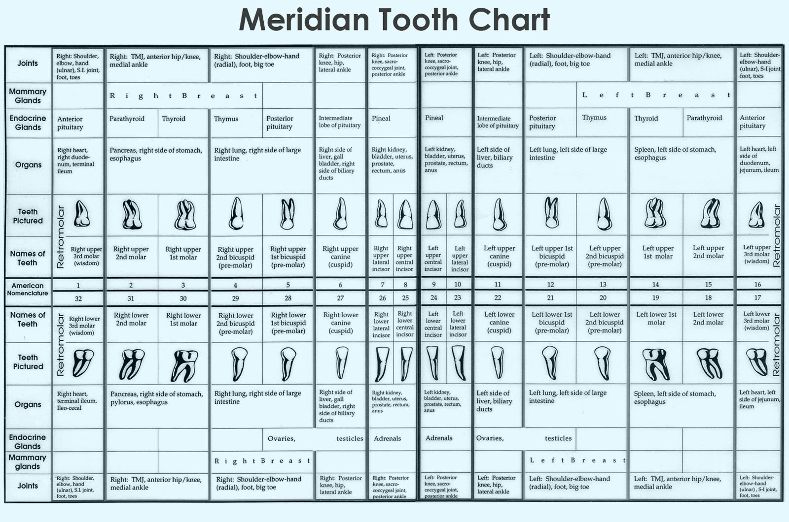 diagram of teeth and their numbers radial lighting circuit wiring understanding the meridian tooth chart