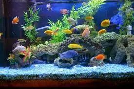 Top 10 aquarium in india - Aquarium dekorieren ideen ...