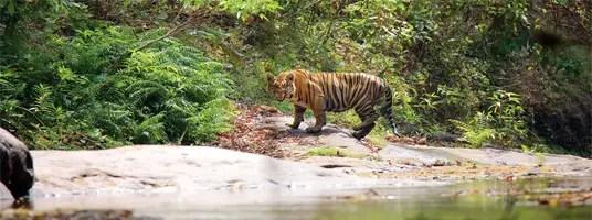 Parambikulam sanctuary tourist places in valparai