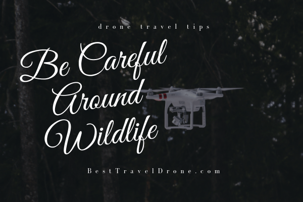 Image of Drone flying in forest with text saying Be Careful Around Wildlife - traveling with a drone tips
