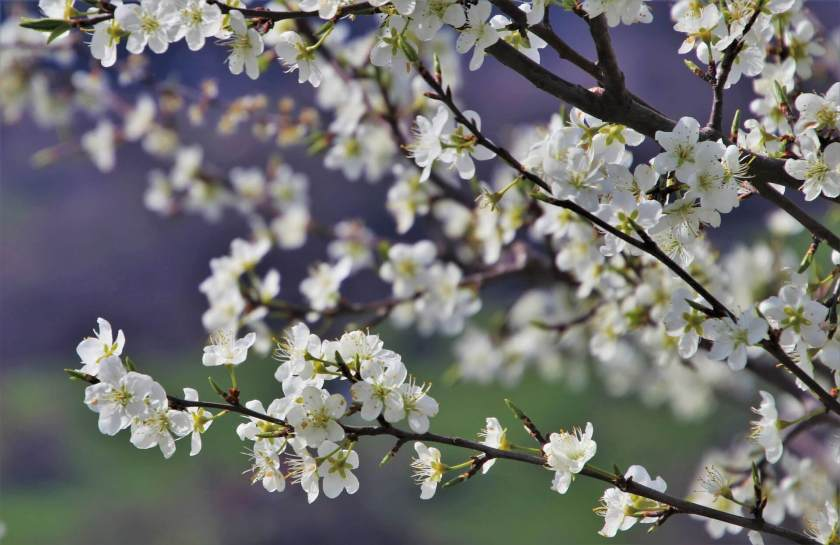 Spring-Tree-Care-and-Maintenance-Tips-Keep-Your-Trees-Healthy
