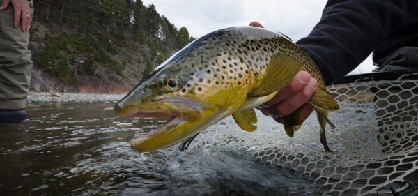 Best Trout Lures for Rivers and Streams Our Top 10 Picks
