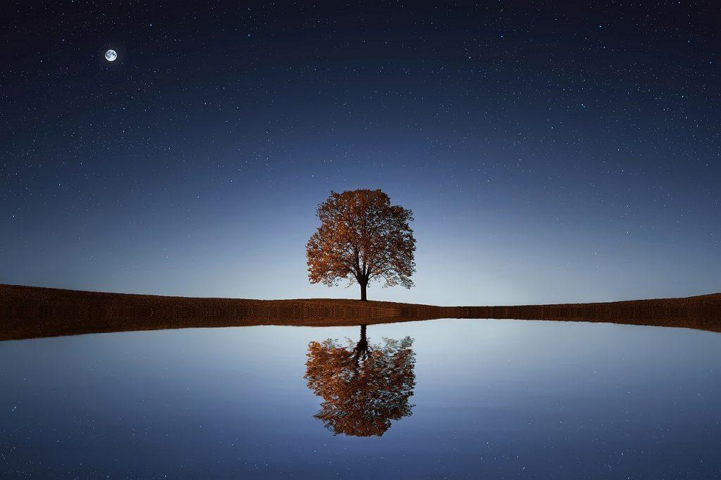 komposisi foto sederhana pohon