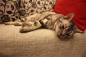 resting-cat