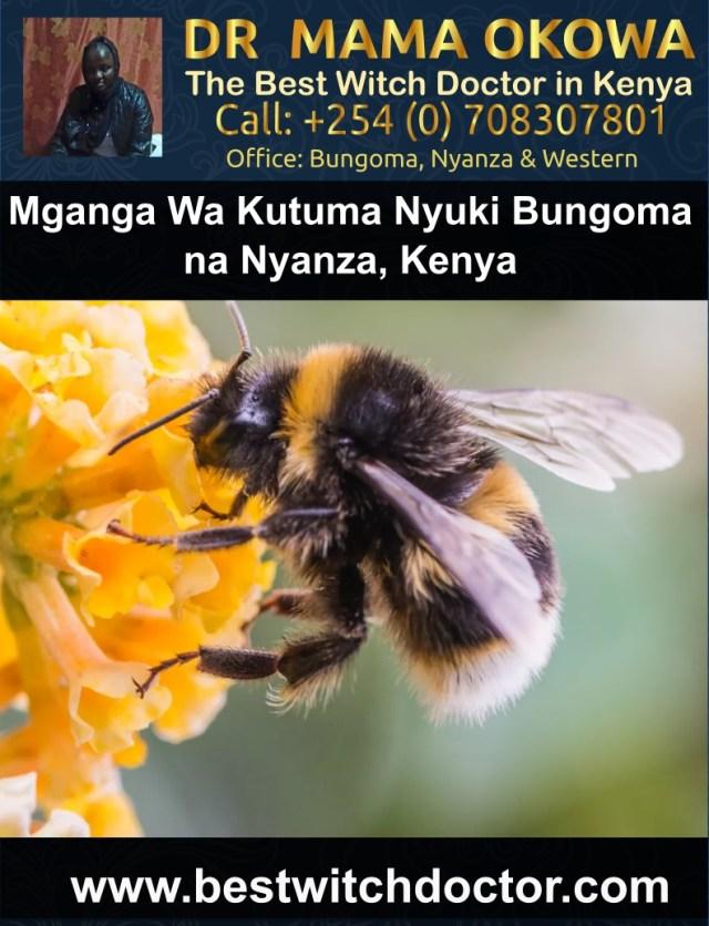 Mganga Wa Kutuma Nyuki Bungoma na Nyanza, Kenya