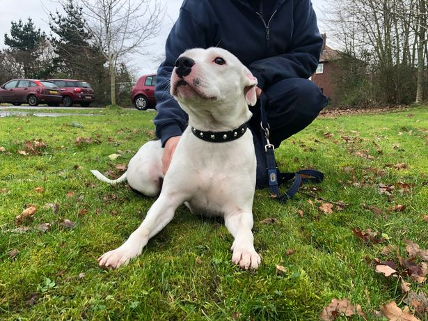 Snoop is enjoying his new life with Laurence. Credit: RSPCA