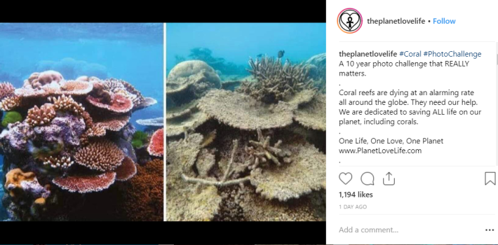 Reportedly half of the Great Barrier Reef has disappeared since 2016. Credit: Instagram