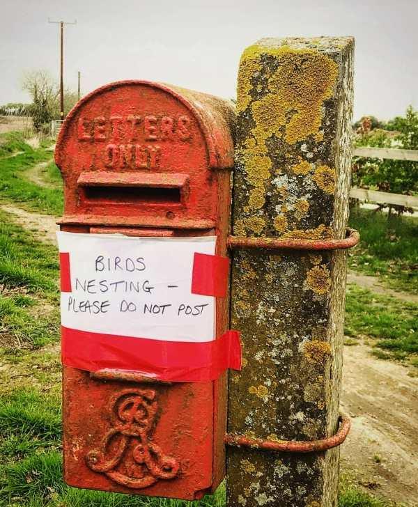 Temporary Mailbox Post - Exploring Mars