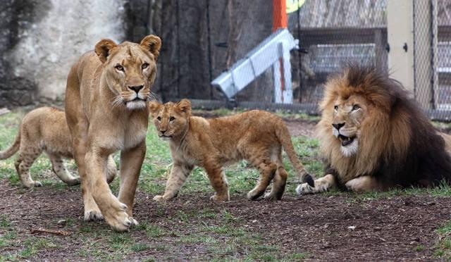 Credit: Facebook/Indianapolis Zoo