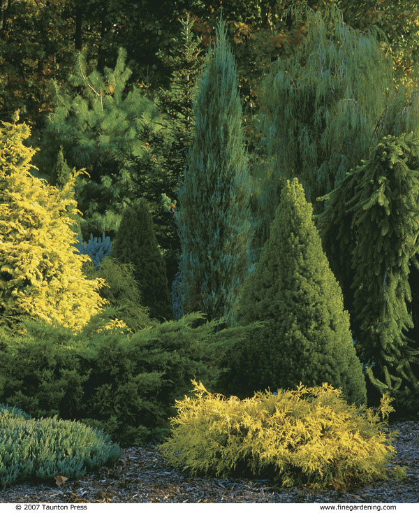 composing with conifers - finegardening