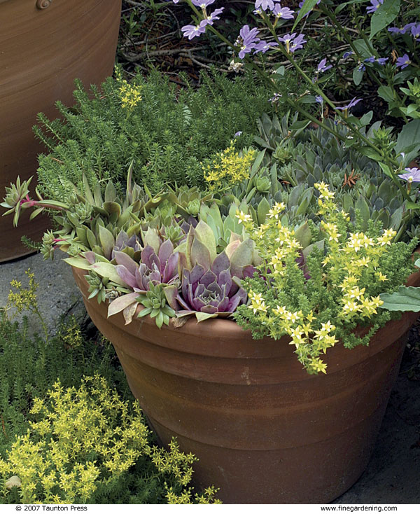 Above Ground Garden Containers
