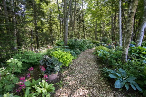 woodland garden - finegardening